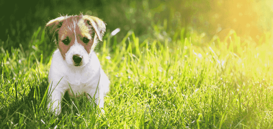 Cómo reducir los gastos en el hogar - mascotas