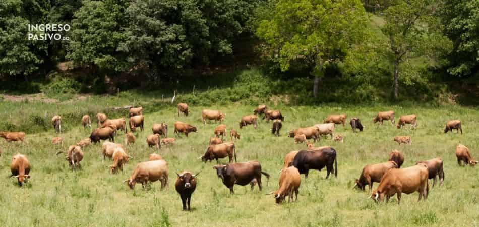 17 vacas se come el argentino promedio en la vida