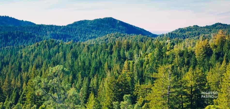 Ingresos pasivos de por vida con árboles