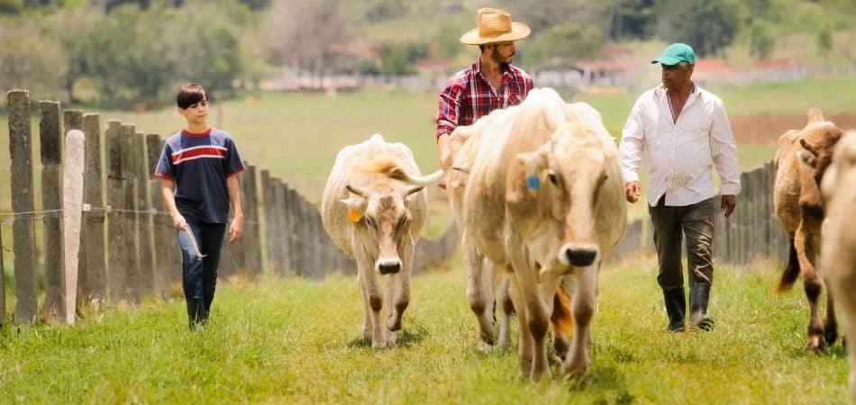 ganar dinero en un terreno con vacas para leche o carne